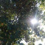 12/11~26 家づくり相談会/予約制/栃木県栃木市の家づくりイベント